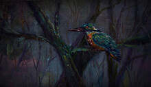 Kingfishers Come To The Stream...
