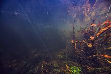 Algae In The Ocean Underwater ...