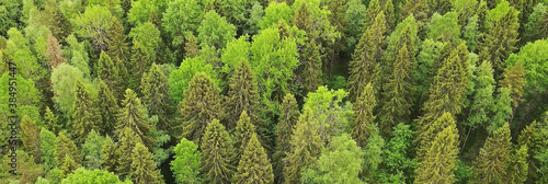 Fotomural forest top view, landscape panorama view of summer forest with quadrocopter aeri