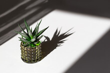 Evergreen Succulent Haworthia In Glass Pot On White Table. Home Plant Cactus In Small Flowerpot With Dark Shadows From Light From Window. Minimal Still Life Image.