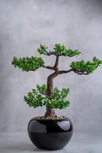 Plastic Bonsai Tree (artificia...