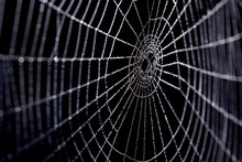 Closeup Of Spider Web With Wat...