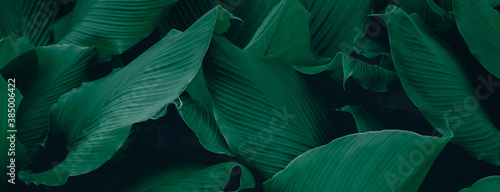 Fotografie, Obraz tropical leaves, abstract green leaves texture, nature background