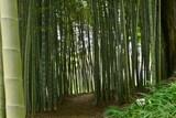旧家の庭にある整備されたきれいな竹林