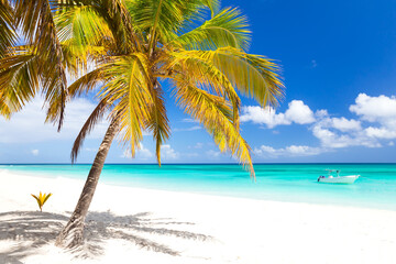 Bright tropical nature with coconut palm tree