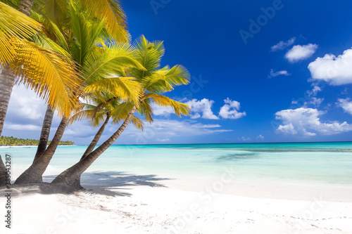 Fototapeta Coconut palm trees on caribbean island Saona