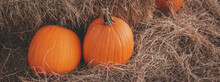 Pumpkins On A Pumpkin Patch In...