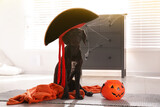Adorable German Shorthaired Pointer dog in pirate hat with Halloween trick or treat bucket indoors