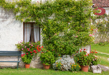 Exterior Of An Old Traditional Rural Building Deorated With Plants And Flowers