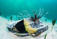 Invasive Lionfish And Plastic ...
