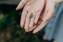 Small Tree Frog Held In Hands ...