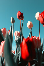 Looking Up At Tall Tulips And ...