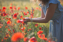 Young Woman Holding Flower While Standing In Poppy Field