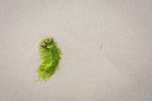 Seaweeds Lying On Beach Sand