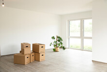 Cardboard Boxes With Monstera Deliciosa On Floor Against White Wall In New House