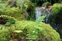 小川の岩に生えた小さな植物 1