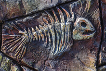 Artificial Copy Of Ancient Fossil Fish On Stone Wall Of Children's Paleantological Museum. Skeleton Of Predatory Aquatic Life