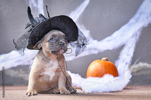 Fotomural Adorable French Bulldog dog puppy dressed up with large Halloween witch hat in f