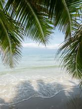 White Sand Beach Under Coconut...