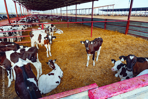 Modern outdoor cowshed with herd of milky cows Fotobehang