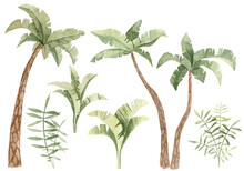 Collection Of Hand Painted Watercolor Tropical Trees And Bushes