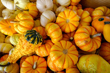 Assortment Of Colorful Gourds ...