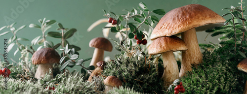 Fotografering Brown boletus edulis mushroom growing in autumn green moss with red lingonberry, green grass