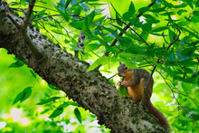 Squirrel Eating In Tree
