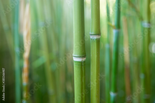 Close-up of bamboo stalks on green blurred background