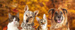 canvas print picture - Autumn Dog and Cat Scene Web Banner