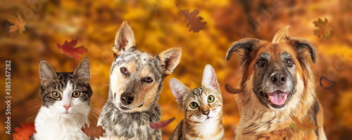 Autumn Dog and Cat Scene Web Banner - 385367282