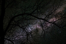 An Eerie, Moody Night Time Shot Of The Milky Way With A Tree In The Foreground Featuring No Leaves In The Late Fall Season. Halloween, Spooky Themed.