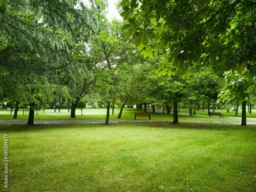 Obraz na plátně Parque verde urbano  con  distintas especies de árboles y bancos