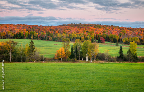 Obraz na plátně Autumn trees in the middle of meadow in Michigan upper peninsula countryside
