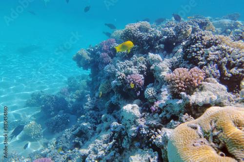 Obraz coral reef in Egypt, Makadi Bay - fototapety do salonu