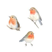 Watercolor Robin Birds Sitting...