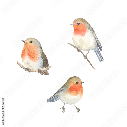 Fotografie, Obraz Watercolor Robin birds sitting on branches, set cute birds isolated on white background for your design card, wallpaper or textile