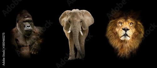 Naklejka premium Group of animals: elephant, gorilla, lion