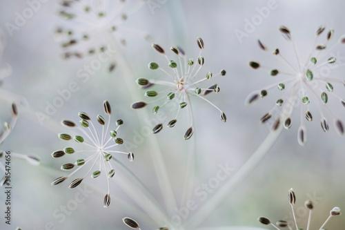 Macro de graines fleuries - Arrière plan naturel végétal