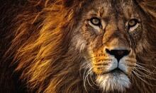 A Wildness Of Lion And Beauty Of Nature Is Shown Here. A Good Leader's Vision Is Same To Lion's Vision.