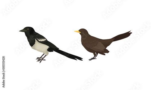 Obraz na plátně Feathered Birds or Avian with Magpie Vector Set