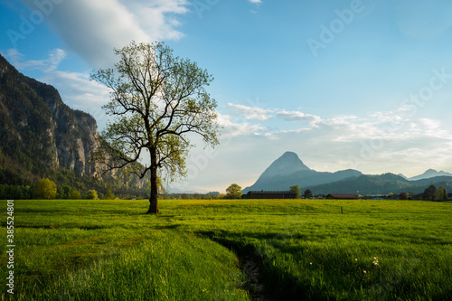Lonely tree in spring in the evening light in Ebbs near Kufstein with mountains Fototapeta
