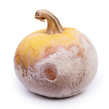 Rotten Pumpkin Isolated