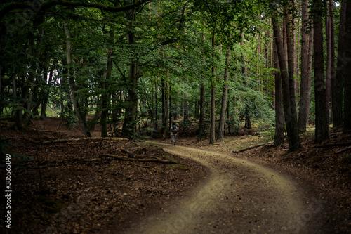 Fotografie, Obraz darss primeval forest