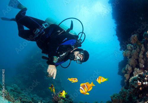 Scuba diver and Group of Clownfish (Anemonefish).