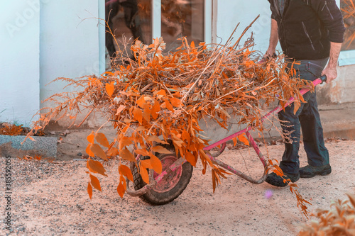 Fototapety, obrazy: Abstract unrecognizable man carrying a cart with natural debris from bushes and trees. Autumn, life in the suburbs, cutting and cleaning branches and yellow leaves