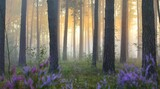Picturesque scenery of the evergreen woodland in a fog at sunrise, forest floor of blooming heather flowers close-up, ancient fir and pine trees in the background. Idyllic autumn scene. Pure nature