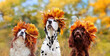 Head portrait of three dogs wearing autumn leafs crowns wide picture