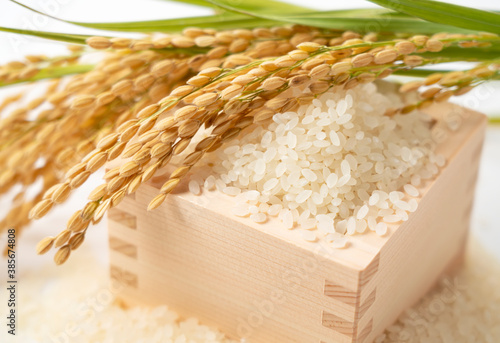 Fotografie, Obraz White rice, Masu and ears of rice on a white background