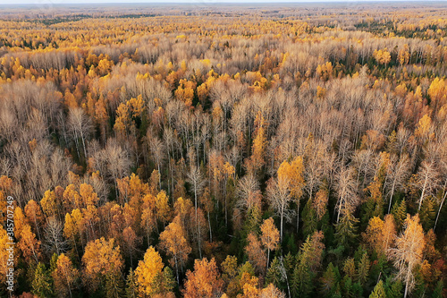 Obraz autumn forest landscape, view from a drone, aerial photography viewed from above in October park - fototapety do salonu